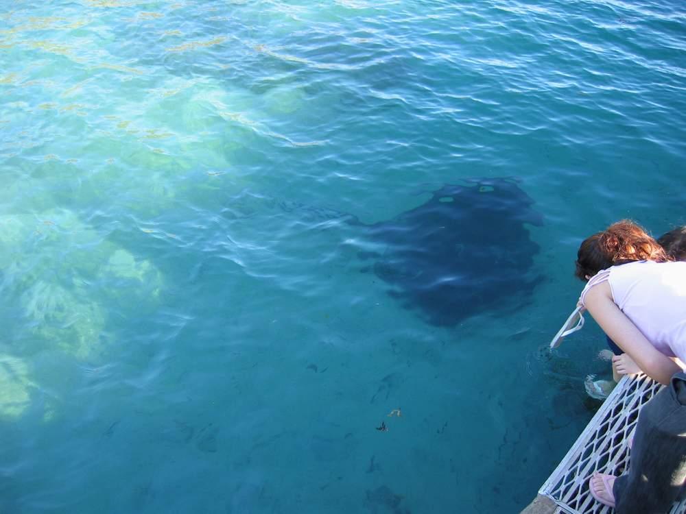 国家二级保护动物蚝